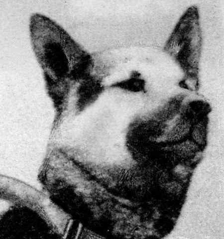 Фильм четыре танкиста и собака
