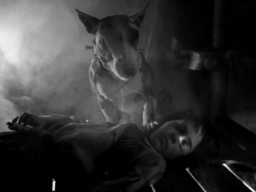 «Франкенвини». Реж. Тим Бертон, 1984