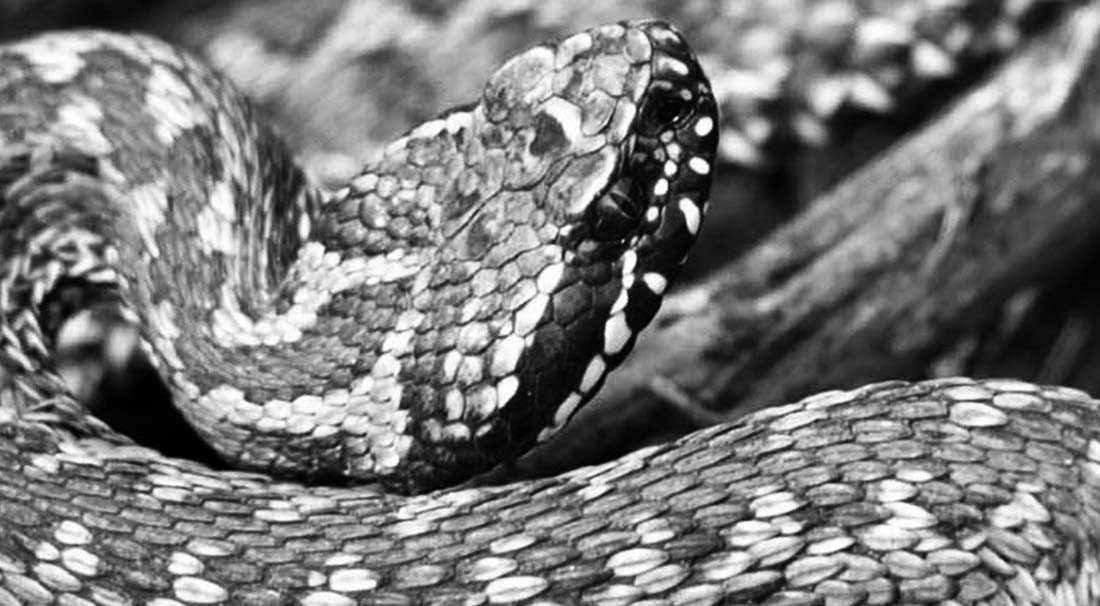Зона змеи