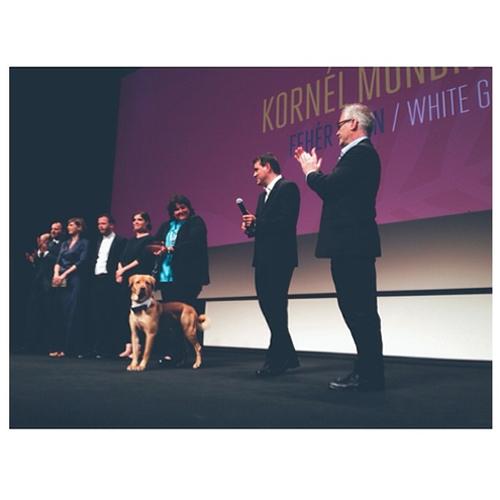 На премьеру нового фильма Корнеля Мундруцо пришла собака-актер в смокинге