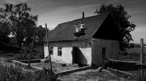 «Хозяева». Реж. Адильхан Ержанов, 2014