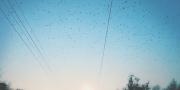 Кино 2014. Год документального кино
