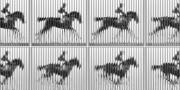 Эдвард Майбридж. «Лошадь в движении», 1878.