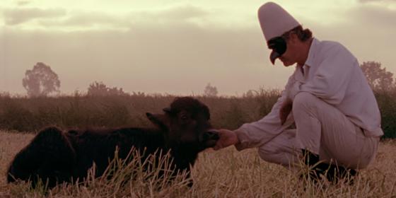 «Прекрасная и потерянная»: Идет бычок, качается